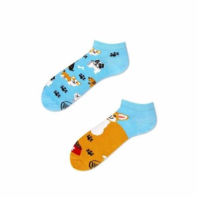 Many Mornings Socks Playful Dog Low